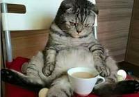 喵說鏟屎的想喝咖啡在線等