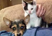 小貓和小狗在街頭相依為命,有家後也形影不離,狗:我算單身狗嗎