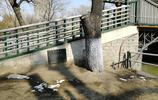 兆麟公園裡的這座小橋已有百年曆史,你能看出來嗎?