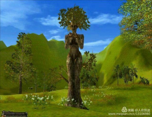 神奇大樹,千姿百態