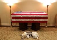 """""""忠犬""""薩利默默守護老布什靈柩,溫情一幕感動美國民眾"""