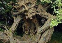 """印度尼西亞""""食人樹"""",活活把人吃掉的""""恐怖植物"""",當地人為何奉若神靈?"""
