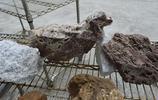 安徽農民景區賣石頭,有一塊像鴿子又像綿羊,看看主人開價多少?