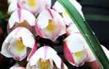 行走的風景——直須看盡滿城花,始共春風容易別3