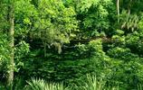 美麗的巴西熱帶雨林