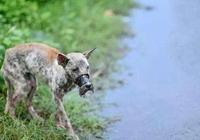 好人有好報,小夥當年救了一隻流浪狗,沒想到帶他走上了人生巔峰