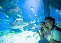眉山聖豐國際將建海洋世界主題公園