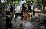 實拍:天津高校為流浪狗安家,如今狗狗的生活相當幸福!