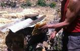 雲南大山,肌肉發達的50歲精壯大爺徒手採蜂蜜