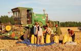 小麥的收割季就要來了,可是農民卻高興不起來,到底是為啥呢?
