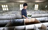 """不再外出打工,江西農民有膽識在家養殖""""稀罕物"""",有望大賺一筆"""