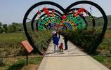 行走洛陽:洛陽宜陽縣七彩花海公園,我也來轉轉,你去過嗎?