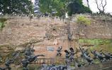 實拍通遠門城牆遺址:重慶現存不多的老城遺蹟之一