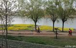 春滿潁河,菜花金黃、玉蘭飄香