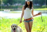 飼養泰迪犬,在夏天不能夠犯怎樣的錯誤?