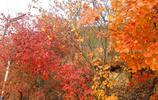 平谷金海湖紅葉似火染紅了整座山,僅剩10天觀賞期,速來!