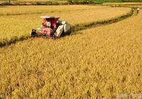 糧食價格提高多少倍,可以極大刺激農村種糧積極性呢?你猜多少