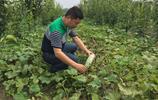 農村小夥放棄百萬年薪 投入千萬回鄉創業 打造千畝生態果園