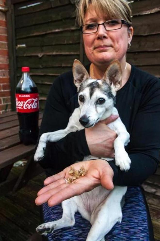 狗狗也愛喝可樂,20歲狗狗喝可樂治好老年痴呆,但掉光了牙齒