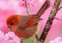 陽春三月,鳥語花香!