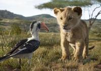 獅子王25年後重返非洲,虛擬現實技術加持,經典元素一個都不能少