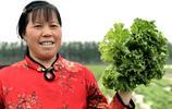 農村人種了一種好吃的奶油生菜,當地人不吃老闆欲免費讓村鄰品嚐