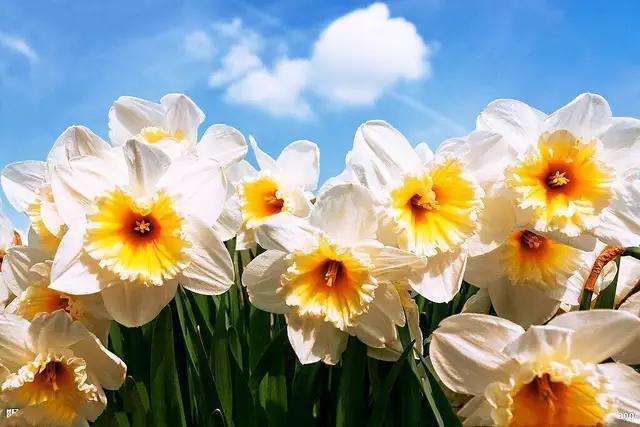【原創詩詞】五律·春節·自顧愛恆長