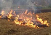 農村出現了這種現象,管也不是不管也不是,比焚燒秸稈爭論還多