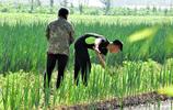 在廣州讀大學的內蒙男孩,一直自己掙學費,暑假家裡農活多,就回來幫爸媽,爸爸按僱工開工錢,他卻只要一半