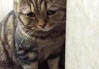 貓咪做錯事把主人氣炸,但看到它那委屈的小表情,瞬間心軟!