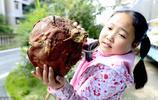 實拍農民收穫的大紅薯 一個紅薯重112斤 網友:紅薯中的巨無霸