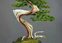遒勁蒼穹的松柏盆景