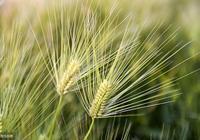 《詩經》中的152種野生植物,寫給喜歡《詩經》的你
