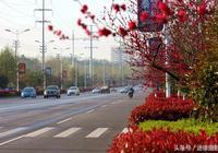 實拍湖北最小城市的街道:鮮花盛開,乾淨整潔,不輸武漢東湖路