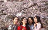 櫻花季,各地開啟人山人海模式,明明去賞櫻,看到更多的卻是人頭