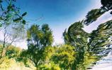 生活在花果園,這些畫面你見過嗎?