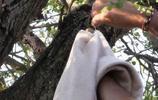 姐姐乘涼發現無毛生物被掛樹上,無助模樣看得人心碎