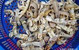 開漁第二天 大漁船還沒回來 近海小海鮮變化不大 鼓眼魚40一斤