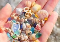 來自海邊之物,不是珠寶卻美過珠寶的首飾,垃圾也可以變廢為寶!