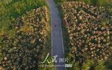 湖北襄陽:千畝漢江溼地秋景美