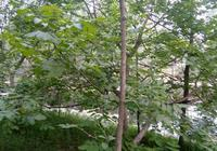 亳州城南清水河兩岸綠樹成蔭芳草如茵