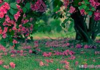 小和尚邀對,上聯:秋風過院花凋落,誠邀眾詩友賜對!