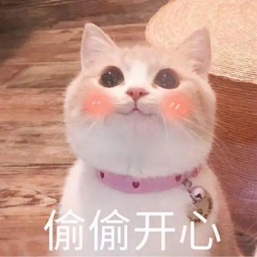 擼貓有助於緩解老年痴呆,你有貓了嗎?