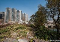 邯鄲:滏陽河舊貌新顏