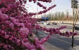 汾河河畔 賞花觀景