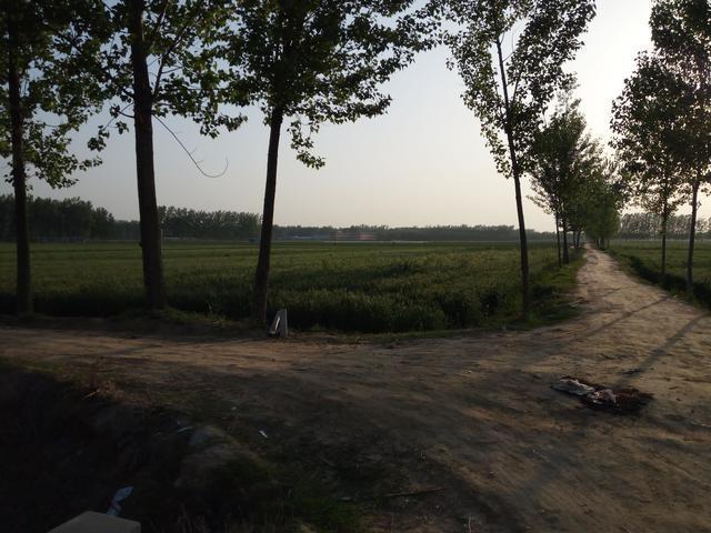 菏澤的田野