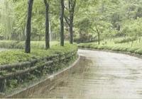 遛狗很重要,下雨天該如何解決?
