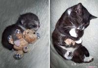 貓狗和心愛玩偶,它們可愛的模樣太萌了!像極小時候的你