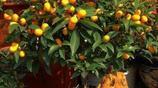 客廳放盆好盆栽植物,老闆家裡都有6種盆栽,福自到到家裡來