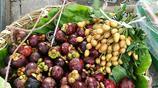 老公花15塊錢買回來的水果被農村的婆婆指責敗家,原因居然是這個……